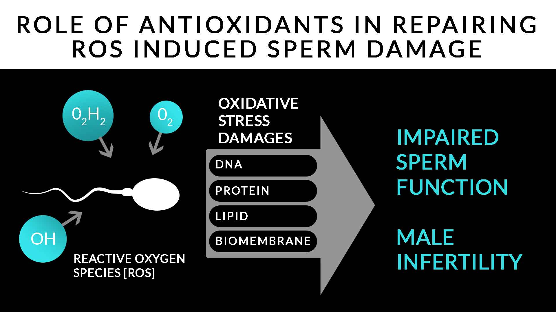 Male Infertility Causes and Treatment | Antioxidant therapy to combat sperm damage