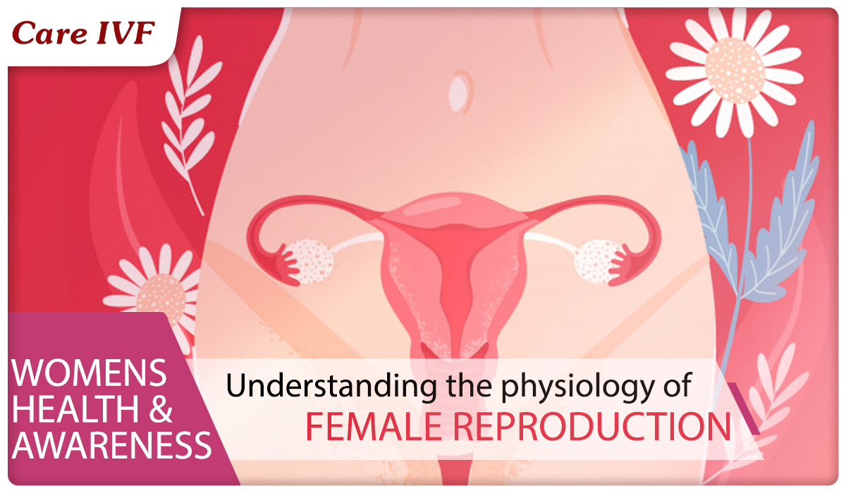 Understanding the Female Reproductive System