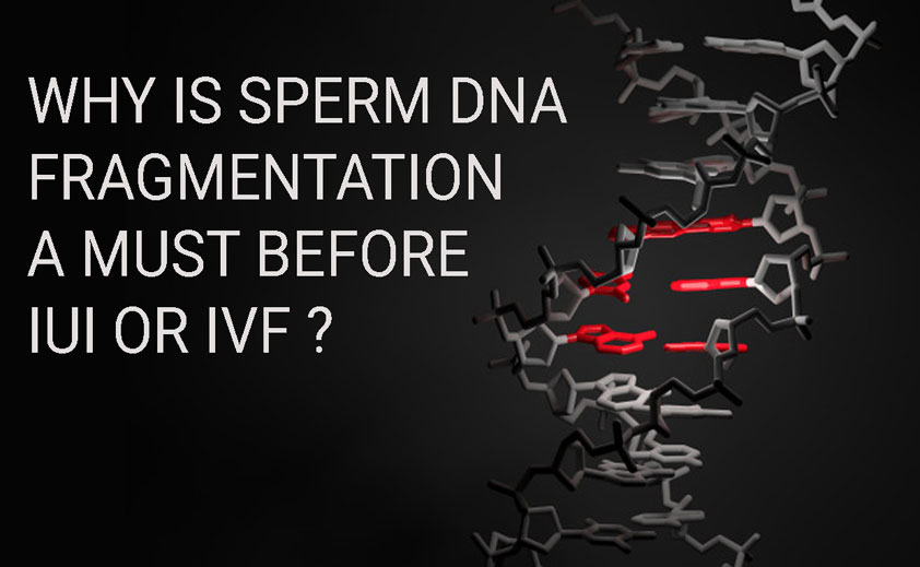 Why is Sperm DNA Fragmentation Tests for male partner necessary in IUI and IVF?