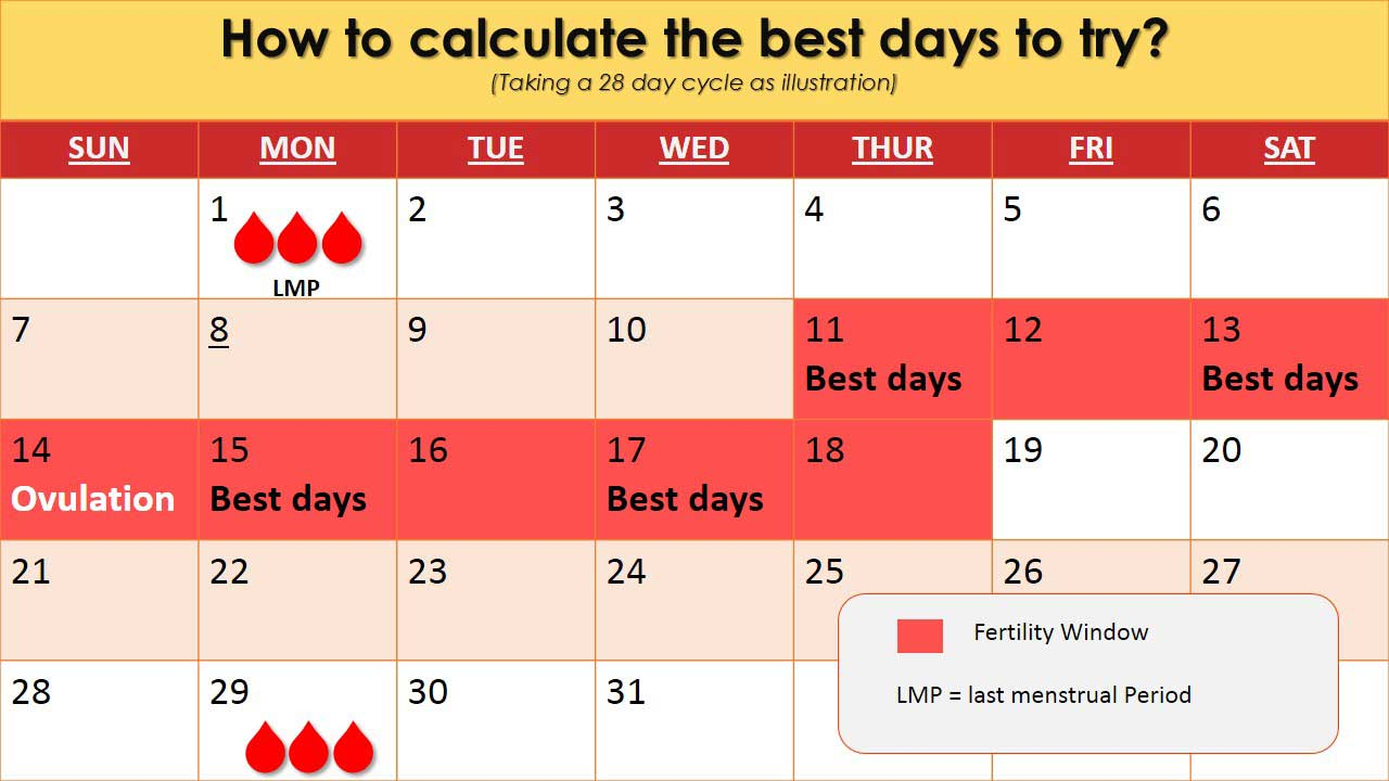 how-to-calculate-the-best-days-for-trying-to-conceive